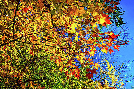 Autumn Abstract by Steve Harrington