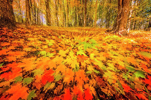 Autumn Abstraction by Peg Runyan