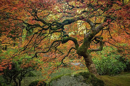 Autumn Along the Pond by Don Schwartz