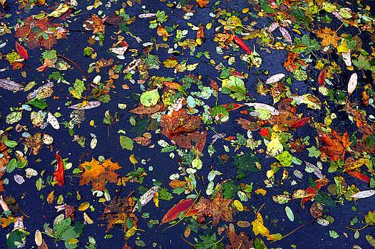 Autumn Arrangement by Lon Casler Bixby