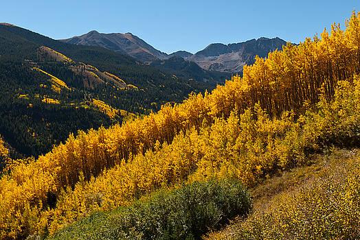 Autumn Aspen Near Castle Creek by Cascade Colors