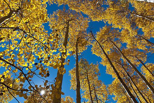 Autumn Aspen with Sunburst by Cascade Colors