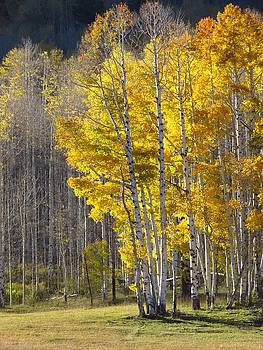 Autumn Aspens by Lori Frisch