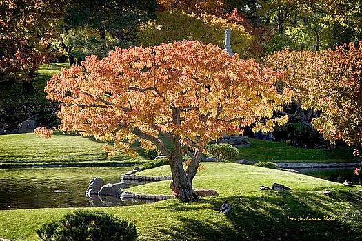 Autumn at Nikka Yuko by Tom Buchanan