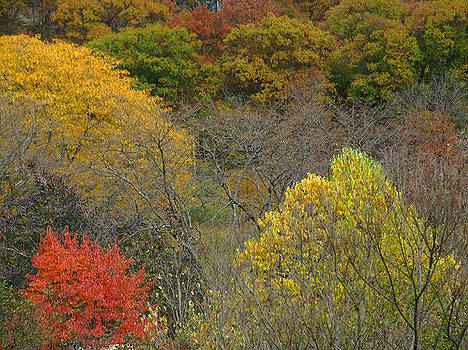 Juergen Roth - Autumn at the Arboretum