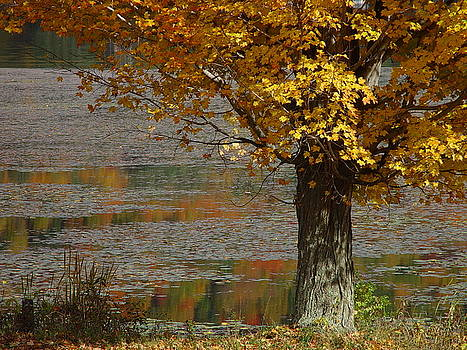 Autumn at the lake St. Catherine by Ken Moran