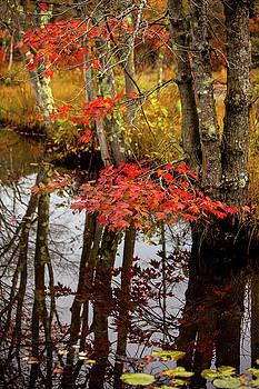 Karol Livote - Autumn At The Pond