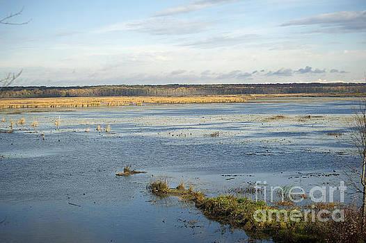 Elaine Mikkelstrup - Autumn at the Tiny Marsh
