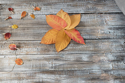 Autumn background. Autumn leaves over wooden background. Thanksg by Julian Popov
