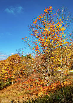 Steve Harrington - Autumn Backroad - West Virginia