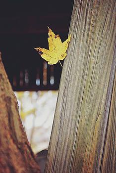 Autumn Barn 1 by Megan Swormstedt