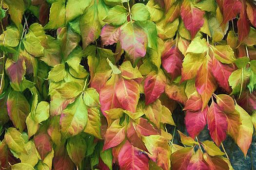 Autumn beauty by Cindy Grundsten