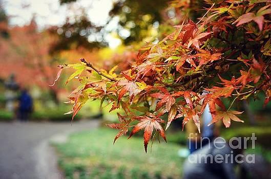 Autumn Beauty by Kiana Carr