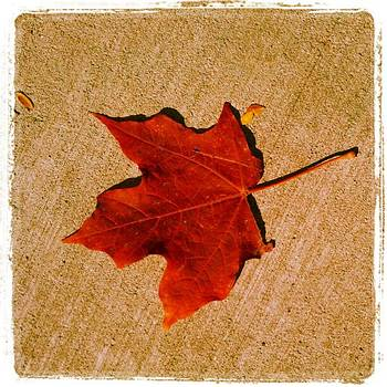 Autumn Beauty by Tammy Winand