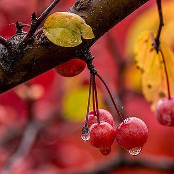 Autumn Berries by Allen Ahner