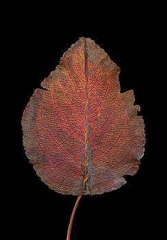 Autumn by Beth Achenbach