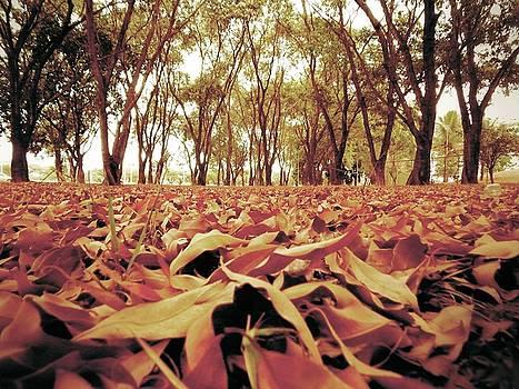 Autumn by Beto Machado