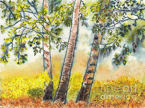 Autumn Birch Trees by Conni Schaftenaar