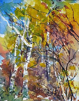 Autumn Birches by Diane Bell