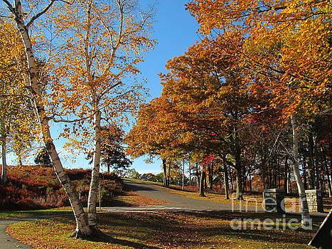 Autumn Birches by Loretta Pokorny