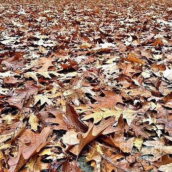 Onedayoneimage Photography - Autumn Blanket