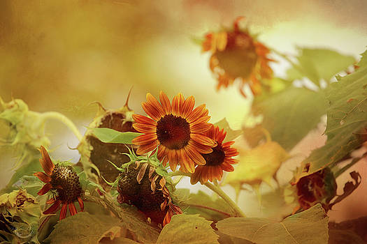 Autumn Blessings by Theresa Campbell