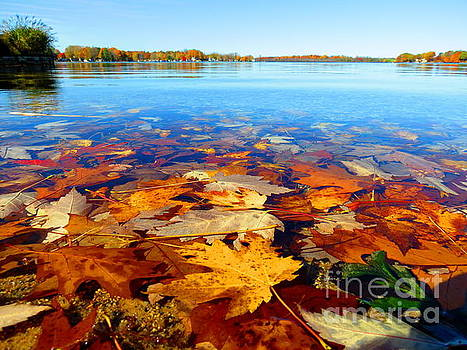 Autumn Bliss of Michigan October Fallen Leaves by Jack Martin
