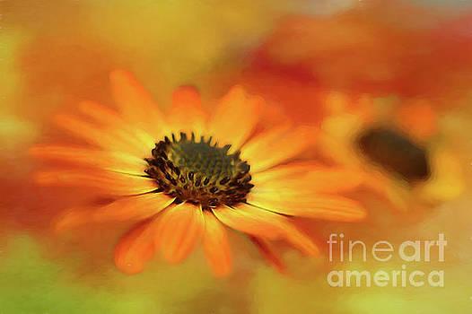 Autumn Blooms by Darren Fisher