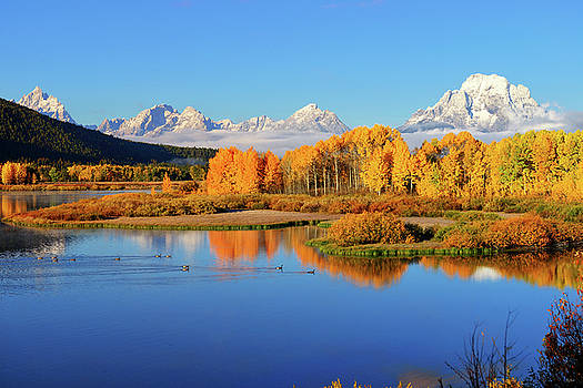 Autumn Blue and Gold by Greg Norrell