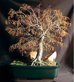 Autumn Bonsai - Wire Tree Sculpture by Sal Villano