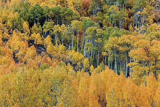 Autumn Bounty by Stuart Gordon