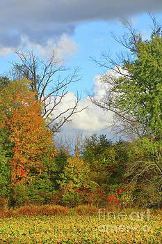 Robyn King - Autumn Breeze Nature Art