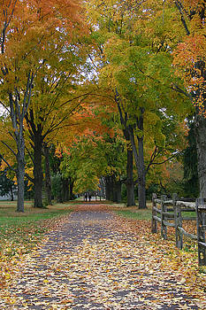 Autumn Canopy by Kelly S Andrews