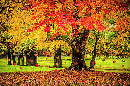 Randall Nyhof - Autumn City Park Scene with Falling Leaves