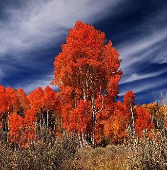 Autumn Color by Dewey Farmer