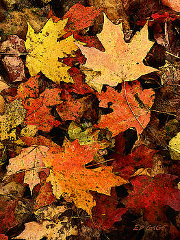 Autumn Color by Ed A Gage
