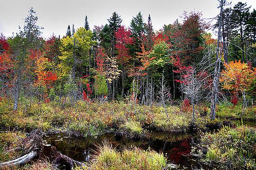 Autumn Color in the Adirondacks by David Patterson