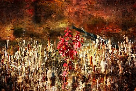 Autumn Colors 15 by Scott Fracasso