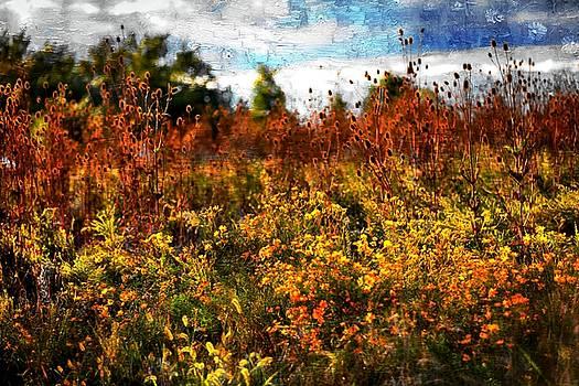 Autumn Colors 25 by Scott Fracasso
