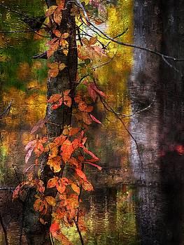 Autumn Colors 34 by Scott Fracasso