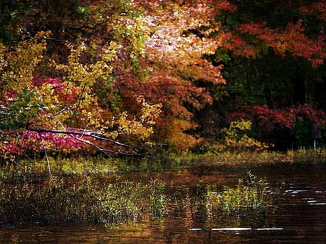 Autumn Colors 4 by Scott Fracasso