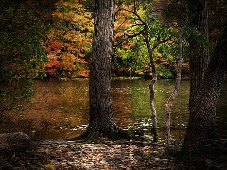 Autumn Colors 8 by Scott Fracasso