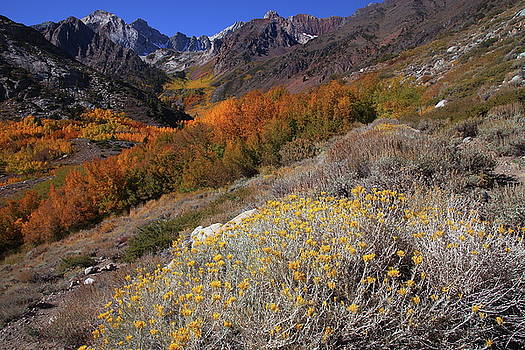 Autumn colors at McGee Creek Canyon in the Eastern Sierras by Jetson Nguyen