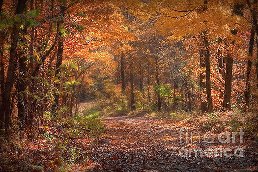 Autumn Colors Country Roads by Peggy Franz