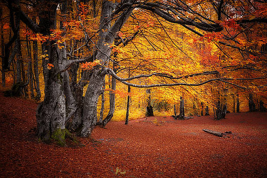 Autumn colors forest by Nickolay Khoroshkov