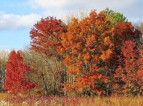 Autumn Colors by Lori Frisch