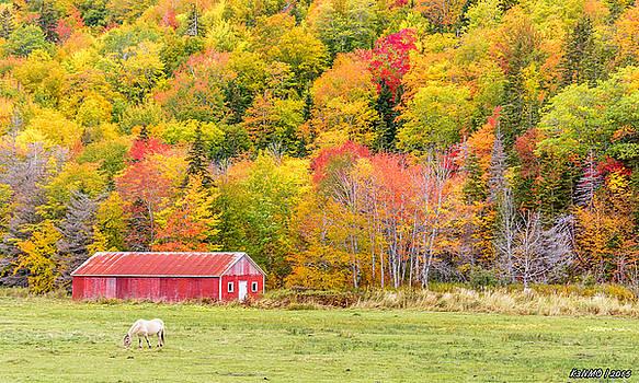Autumn Colors Near Lake Ainslie  by Ken Morris