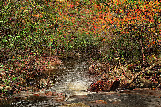 Autumn Colors On Pickle Creek 1 by Greg Matchick