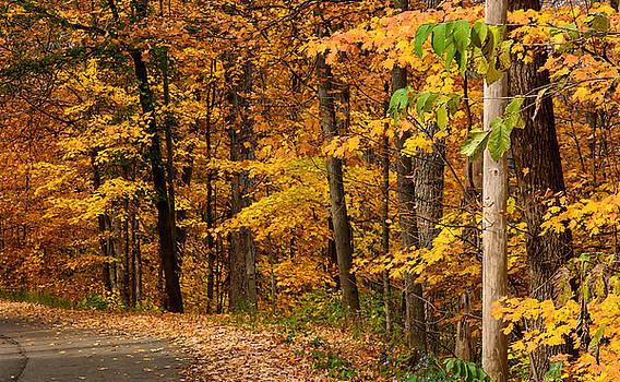 Autumn Colors by Peter Ponzio