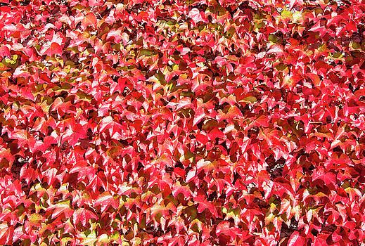 Ramunas Bruzas - Autumn Colors